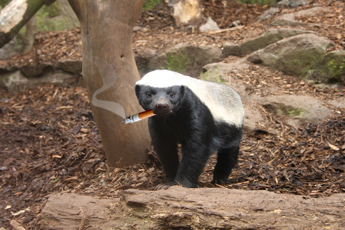 """They Call This The """"Honey Badger"""" Market"""